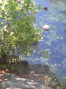 water quiet 1