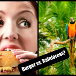 """""""The production of just one quarter-pound fast food hamburger can require the destruction of 55 square feet of tropical rain forest along with much animal and plant life."""""""