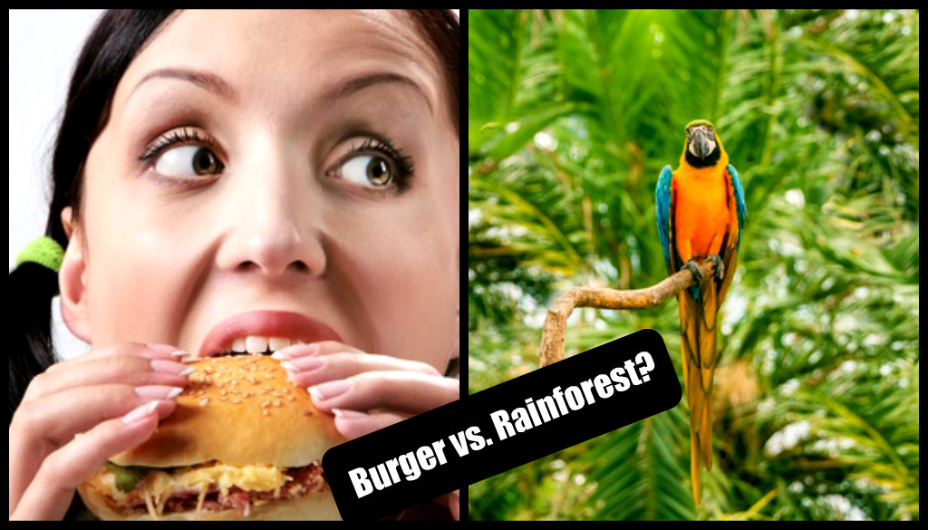 """The production of just one quarter-pound fast food hamburger can require the destruction of 55 square feet of tropical rain forest along with much animal and plant life."""