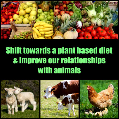 Plant Based Diet Improves out Relationship with Animals