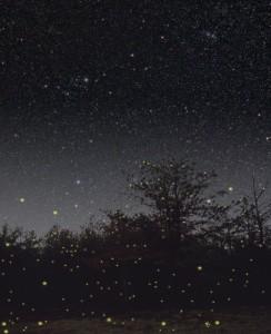 ruah-fireflies22