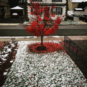 First snow of the season, Julie Danan
